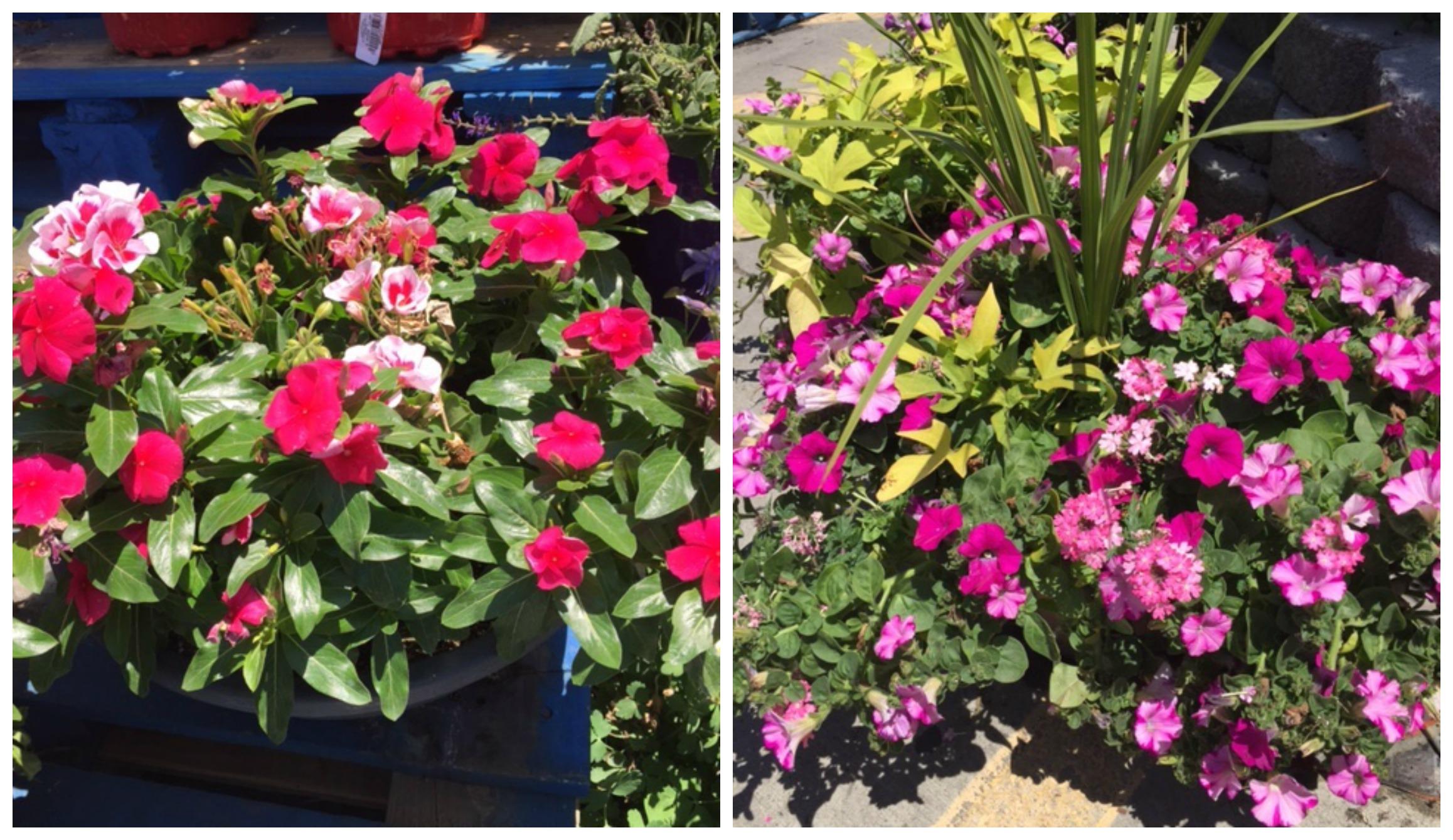 freebies2deals-flowers2