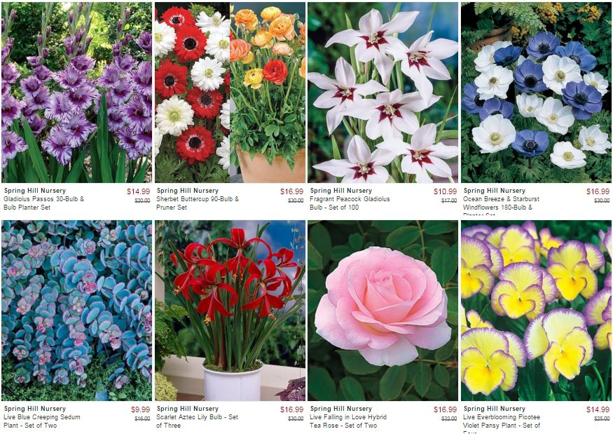 Zulily spring hill nursery sale save over 50 off select flowers zulily spring hill nursery sale save over 50 off select flowers mightylinksfo