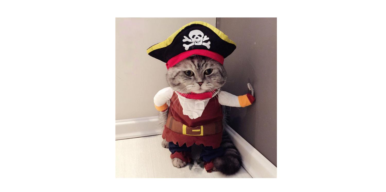 cat-costume