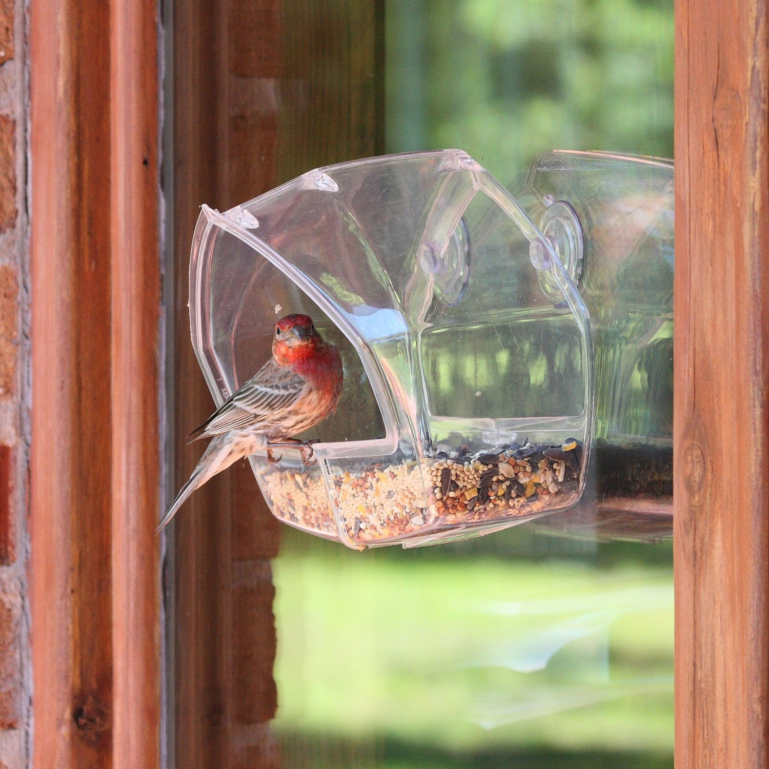 freebies2deals-birdfeeder