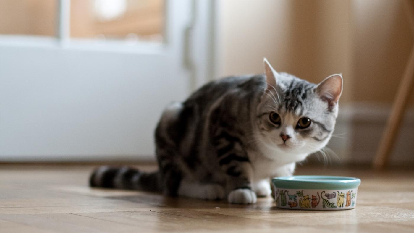 cat-eat_29b15a1be7795b5e