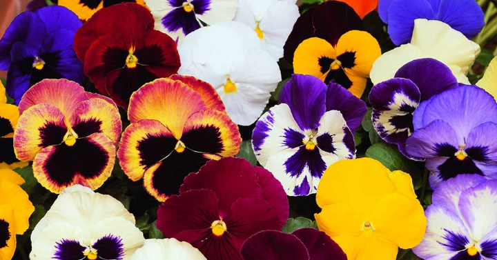 flowers f2d