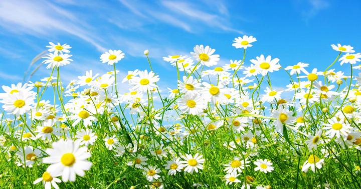 freebies2deals-spring