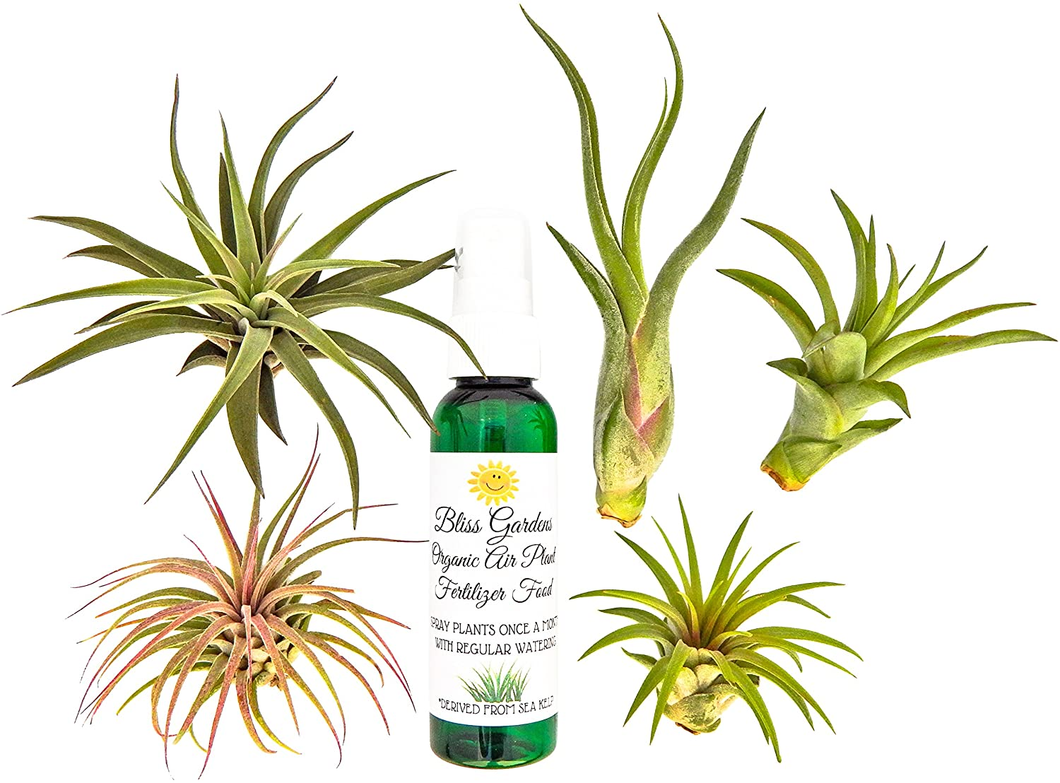 Six Air Plants Only 16 75 Shipped Freebies2deals